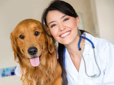 Cute dog at the vet with a happy doctor